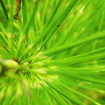 Abstact brilliant green plant 2 by jlisme