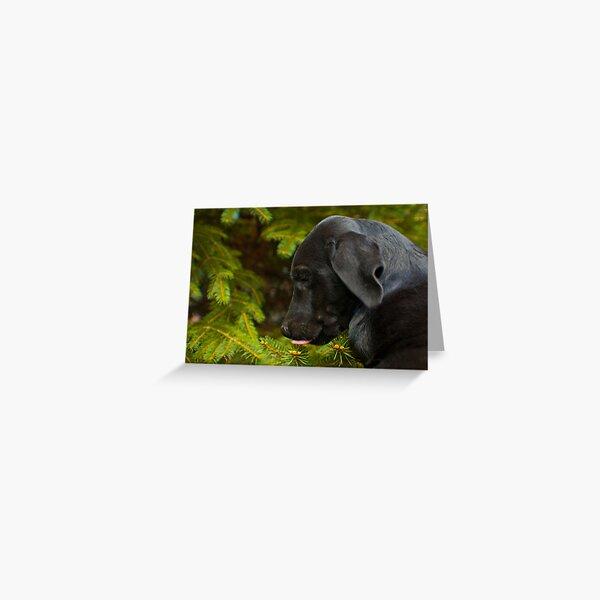 Spruce sap! Greeting Card