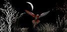 Night Flight by Elaine  Manley