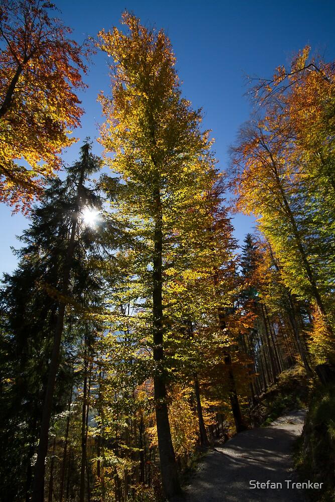 Autumn Colors by Stefan Trenker