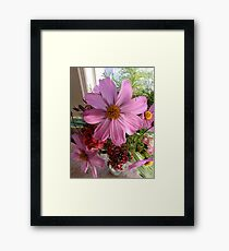 Cosmos and Sweet William Framed Print