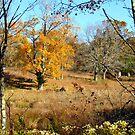 New York Autumn by Alberto  DeJesus