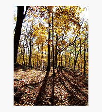 Shadow Trees Photographic Print