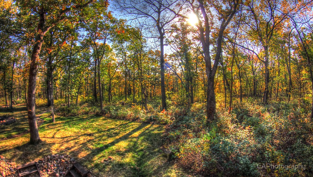 HDR forest by CAPhotography