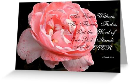 Faded Rose by Heather Crough