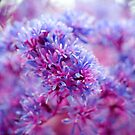 cotton candy bokeh by irishgirl7