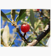 Red Berry? Poster