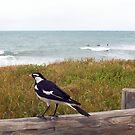 Beach Bird Two - 14 10 12 by Robert Phillips
