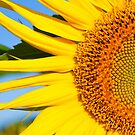 Sunflower Close by philnormanphoto