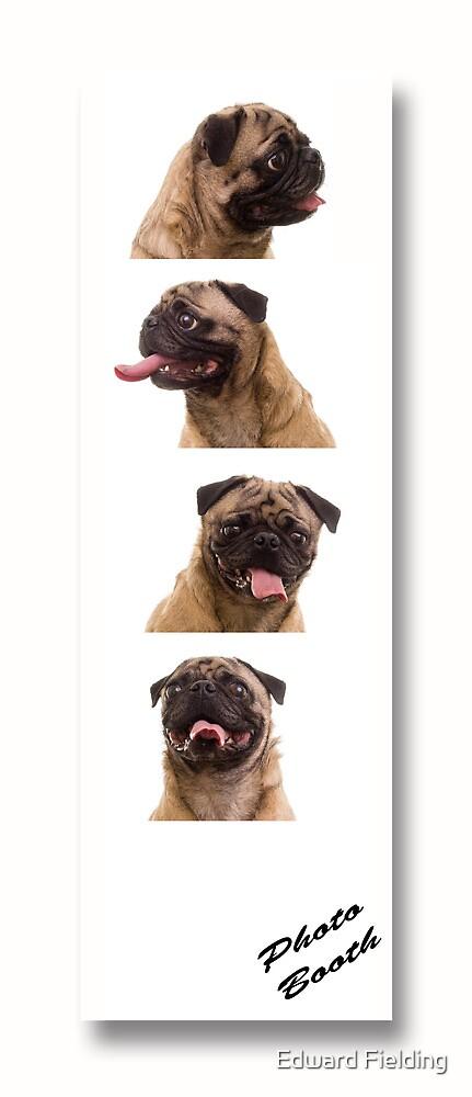 Funny Pug Dog Photo Booth by Edward Fielding
