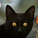 A cat named Spooky by Angie O'Connor