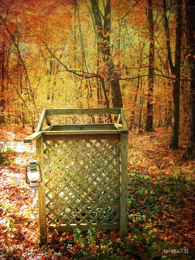 Trellis in Autumn by teresa731
