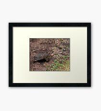 Kenya Terrapin Framed Print