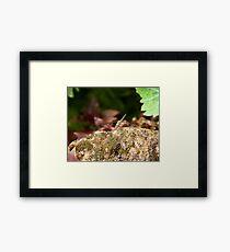 Kenya Dragonfly Framed Print