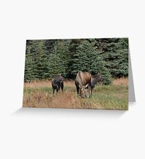 Mother Moose with babies Greeting Card