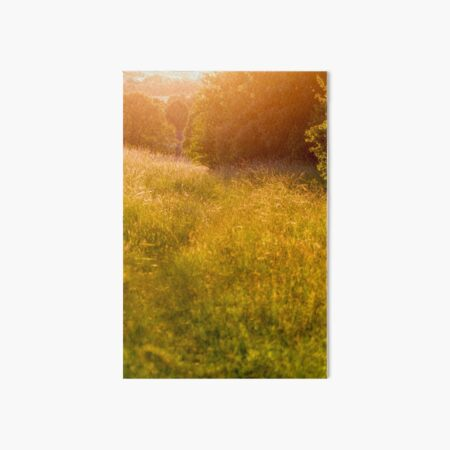Golden meadow afternoon Art Board Print