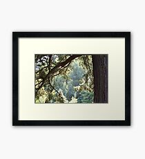 View Through The Trees Framed Print