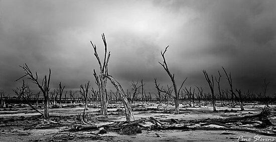 Saltflats by Pene Stevens