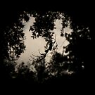 Silhouette by gregAllore