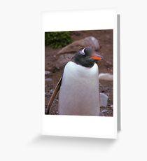 Gentoo Penguin Portrait Greeting Card