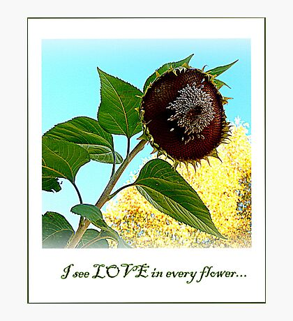 I see LOVE in every flower... Photographic Print
