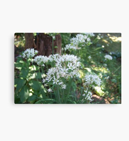Fall Chive Blossoms Canvas Print