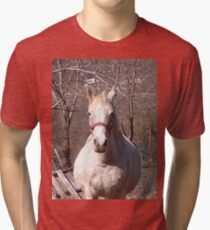 Friendly Horse Coming to Visit Attractive Camera Guy Tri-blend T-Shirt