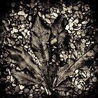 Leaf by Minna  Waring