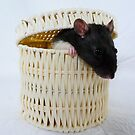 In a basket by KanaShow