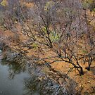 After the Leaves Fall by Scott Hendricks