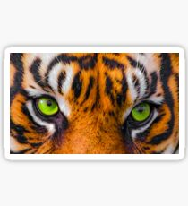 Tigers eyes Sticker