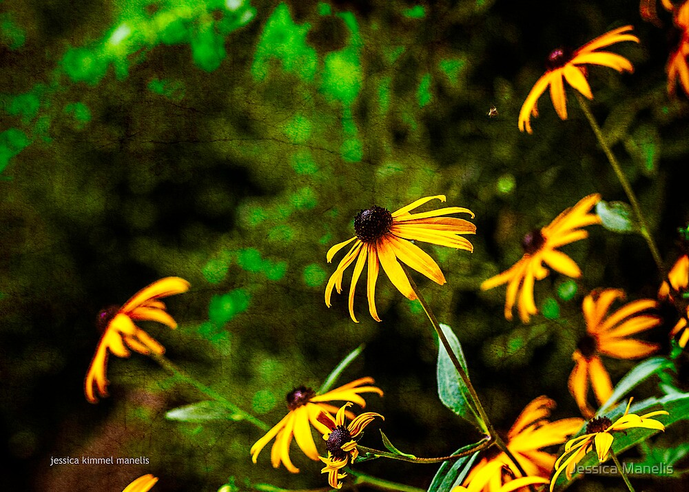 Fresh As A Daisy by Jessica Manelis