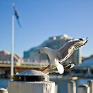 Seagull by Aneurysm