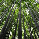 Bamboo forest by Aneurysm