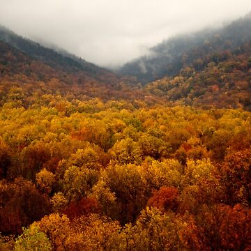 Tennessee October by chaneyforkriver