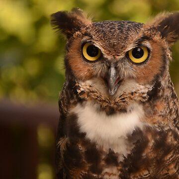 Great Horned Owl by Geier
