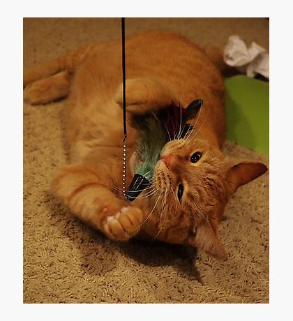 Attack of The Feather Toy Photographic Print