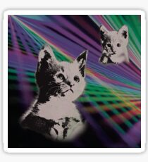 Cat on We Have Lasers Sticker