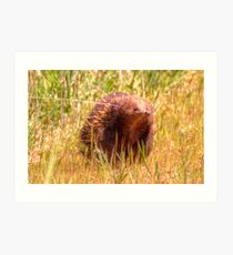 Please Wait I am coming  Echidna aka Spiny Ant Eater Art Print