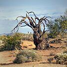 Gnarly Tree by CarolM