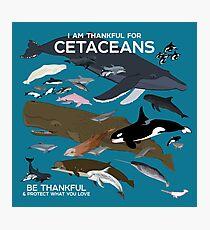 Ich bin dankbar für Cetaceans Fotodruck