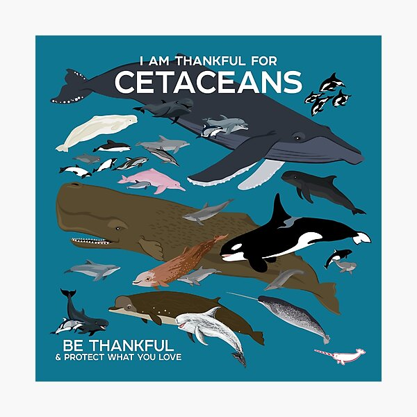 I Am Thankful For Cetaceans Photographic Print