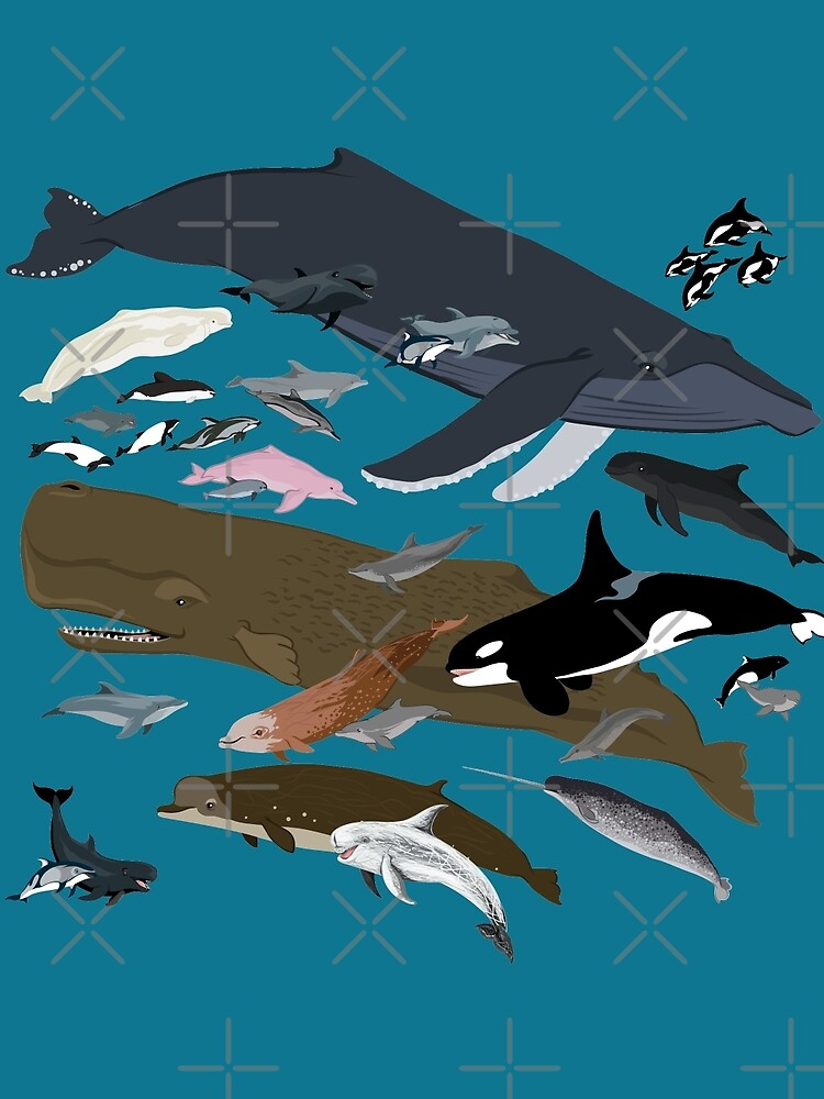 I Am Thankful For Cetaceans by PepomintNarwhal