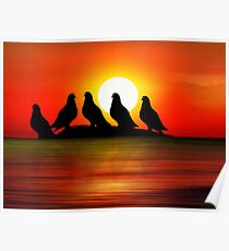 Birds at Sunset point Poster
