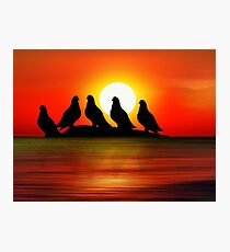 Birds at Sunset point Photographic Print