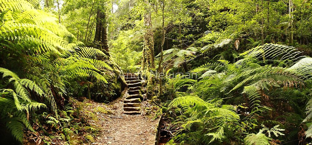 """""""The Fernery"""", Blackheath, NSW.  by Andy Newman"""