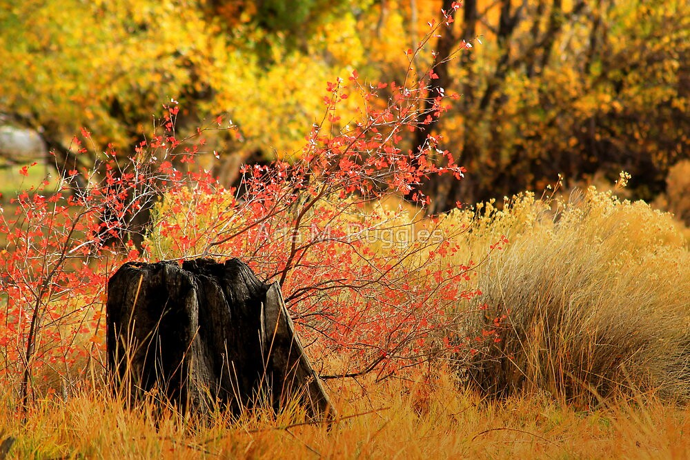 Serenity of the Fall by Arla M. Ruggles