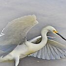 Snowy Egret Grace At The Beach by Deborah  Benoit