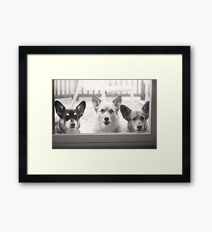 """""""How Much Are Those Corgis In The Window ?"""" Framed Print"""