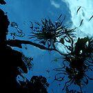 Pandanus over reef by Reef Ecoimages